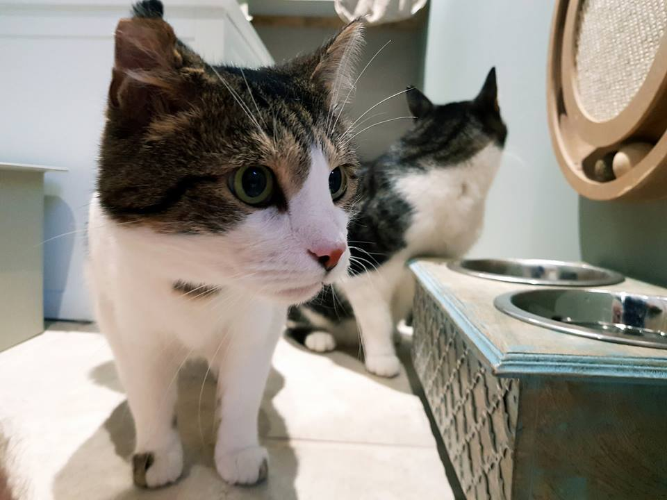 The Pet Joint - Luxury Cat Home Boarding Hotel