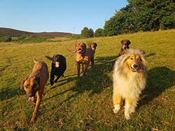 Dogs outside in beautiful countryside