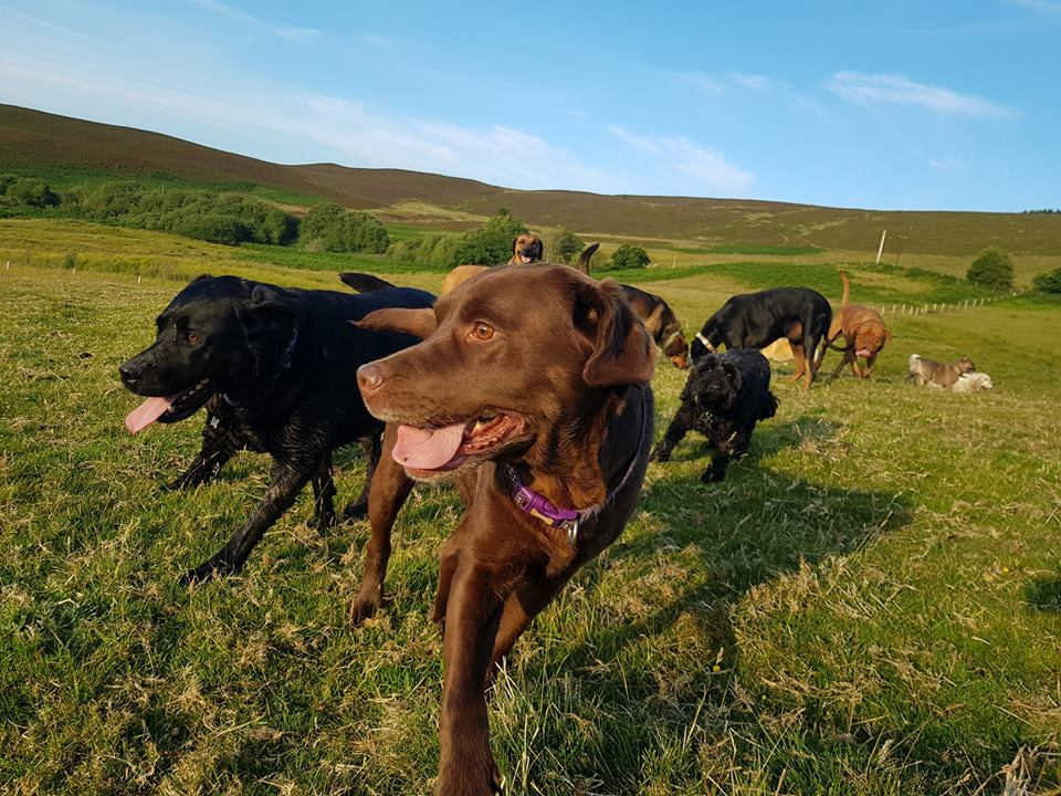 Several dogs together in beautiful countryside